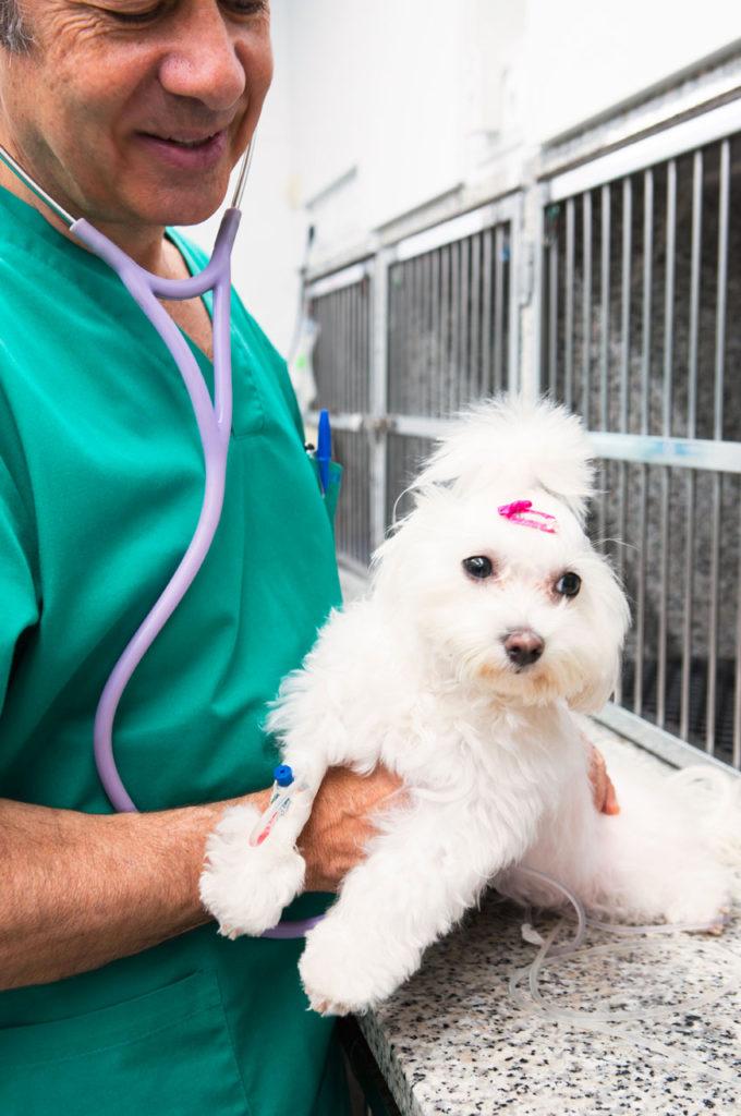Cardiología veterinaria SURvet
