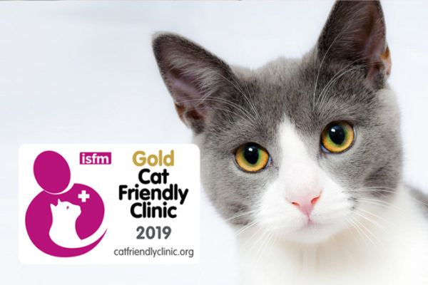 Conseguimos la acreditación ISFM Cat Friendly Clinic Gold