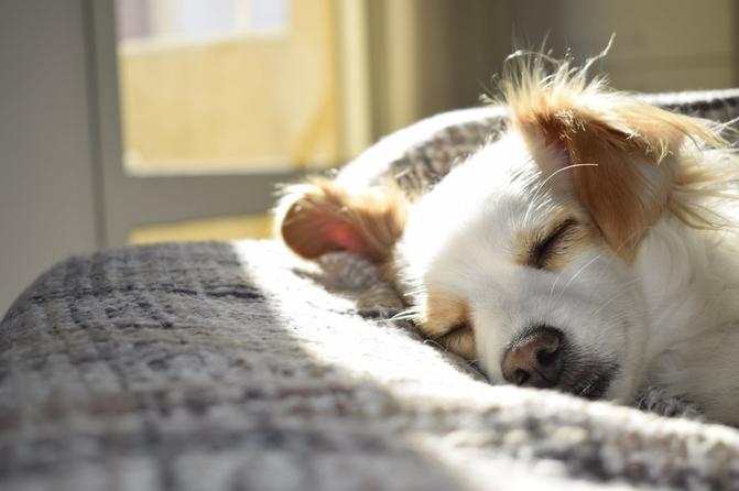 sialorrea en perros causas