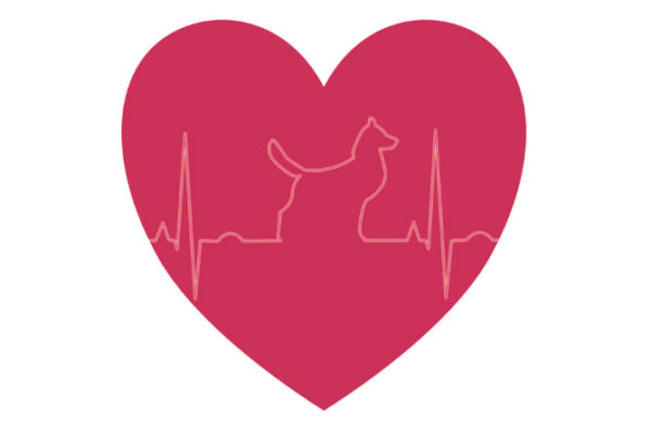 Arrítmies cardíaques en gossos: què són, diagnòstic i tractament