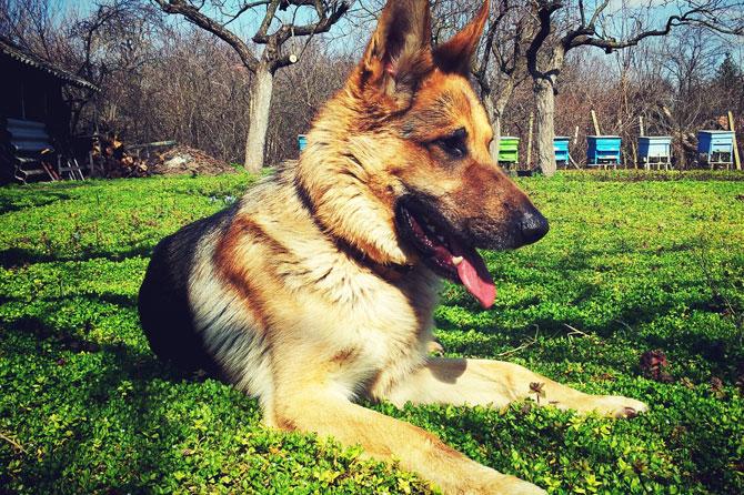 Arritmias cardíacas en perros