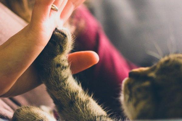 Hipertensión en Gatos: Qué es, Causas y Tratamiento
